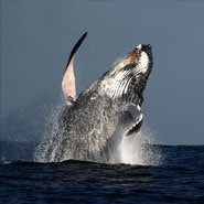 whale-watching-tours