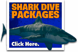 great_white_shark_diving_packages
